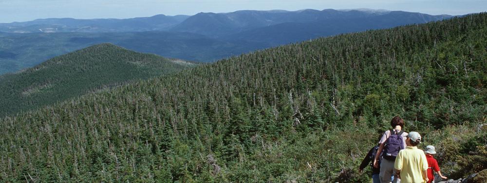 forêt gaspésienne