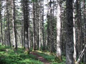 Lac Cascapédia 038
